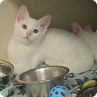 Adopt A Pet :: Neptune - San Leon, TX