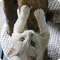 Adopt A Pet :: Buster - Ashland, OH