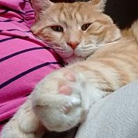 Adopt A Pet :: Logan - Rochester, NY