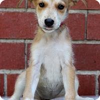 Adopt A Pet :: Danielle - Waldorf, MD