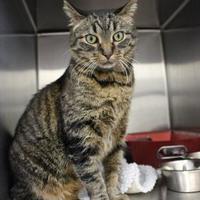 Adopt A Pet :: Udo - Saskatoon, SK