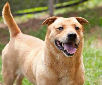 Mixed Breed (Medium) Mix Dog for adoption in Cartersville, Georgia - Meatloaf