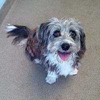 Adopt A Pet :: Parker - Pompano Beach, FL
