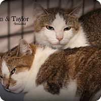 Adopt A Pet :: Taylor - Glen Mills, PA