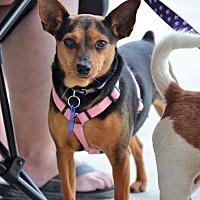 Adopt A Pet :: Tasha - Albemarle, NC