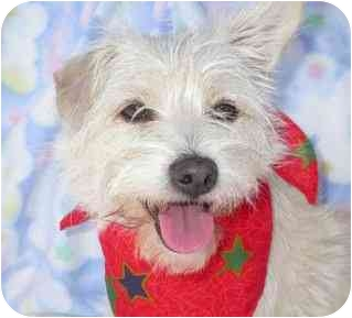 Terrier (Unknown Type, Small) Mix Dog for adoption in Upland, California - Lindsay