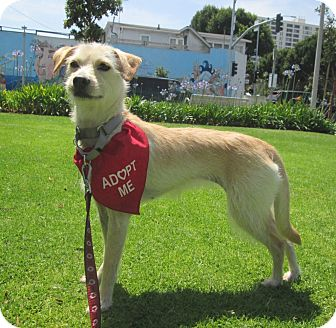 Terrier (Unknown Type, Small) Mix Dog for adoption in Los Angeles, California - HULA