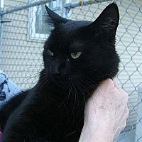 Adopt A Pet :: Belene - Lenhartsville, PA