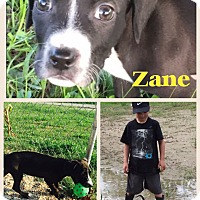 Adopt A Pet :: Zane - Donaldsonville, LA