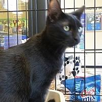 Adopt A Pet :: Patsy - Riverview, FL