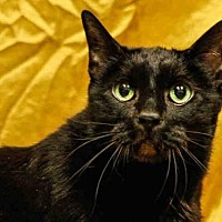 Adopt A Pet :: TOBY - Salt Lake City, UT