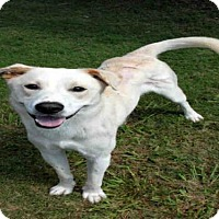 Adopt A Pet :: DASH - Plano, TX
