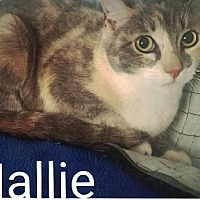 Adopt A Pet :: Mallie - Calimesa, CA