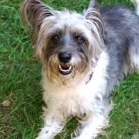 Adopt A Pet :: Tiny - New Freedom, PA