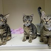 Adopt A Pet :: Peter Louis - Elyria, OH