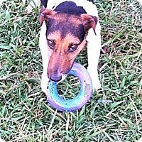 Adopt A Pet :: Zip - Thomasville, NC