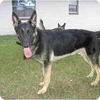 Adopt A Pet :: Major Ben - Green Cove Springs, FL