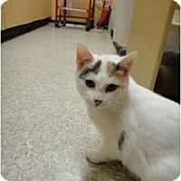 Adopt A Pet :: Tulip - Howell, NJ