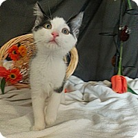 Adopt A Pet :: Aniston - Clearfield, UT