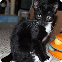 Adopt A Pet :: Alexander - North Highlands, CA