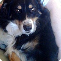 Adopt A Pet :: Maggie Mae FOSTER NEEDED - Minneapolis, MN