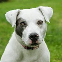 Adopt A Pet :: Bridgette - Troy, IL