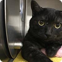 Adopt A Pet :: Bookey - Chico, CA