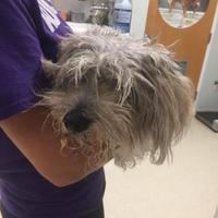 Adopt A Pet :: Tatiana - Myrtle Beach, SC