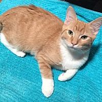 Adopt A Pet :: Tango - Tempe, AZ