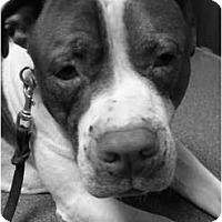 Adopt A Pet :: Henney - Hoffman Estates, IL