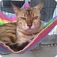 Adopt A Pet :: Precious Peridot - Lantana, FL