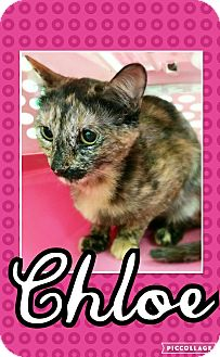Calico Cat for adoption in Edwards AFB, California - Chloe