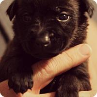 Adopt A Pet :: Gabriel - Fredericksburg, VA