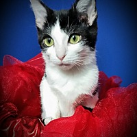 Adopt A Pet :: Rosemary - Fairborn, OH