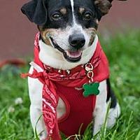 Adopt A Pet :: Bentley - Santa Fe, TX
