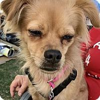 Adopt A Pet :: Mr. Cute Aka Buddy - Las Vegas, NV