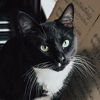 Adopt A Pet :: Pingu - Edmonton, AB