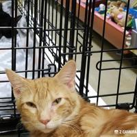 Adopt A Pet :: Alani (Irey Kit2) - McDonough, GA