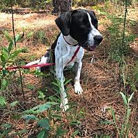 Adopt A Pet :: Winston - Sagaponack, NY