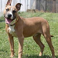 Adopt A Pet :: Tilt - Jerseyville, IL