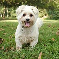 Adopt A Pet :: MANDOLAY - Portland, ME