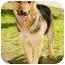 Photo 1 - Shepherd (Unknown Type) Mix Dog for adoption in Marina del Rey, California - Sheila