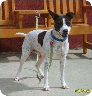 Pointer Mix Dog for adoption in Austin, Minnesota - Filly
