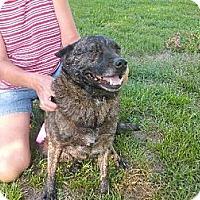 Adopt A Pet :: Graycee - Rayville, LA