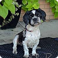 Adopt A Pet :: Flossie Mae - Atlanta, GA