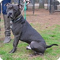 Adopt A Pet :: Dexter - Athens, GA