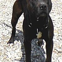 Adopt A Pet :: EZ - Washington Court House, OH