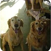 Adopt A Pet :: Tucker & Missy - Scottsdale, AZ