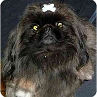 Adopt A Pet :: Anastasia - Mays Landing, NJ