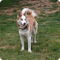 Adopt A Pet :: Skipper - Wilmington, MA